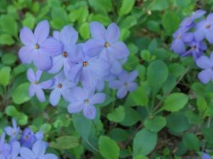 longwood may 2015 019